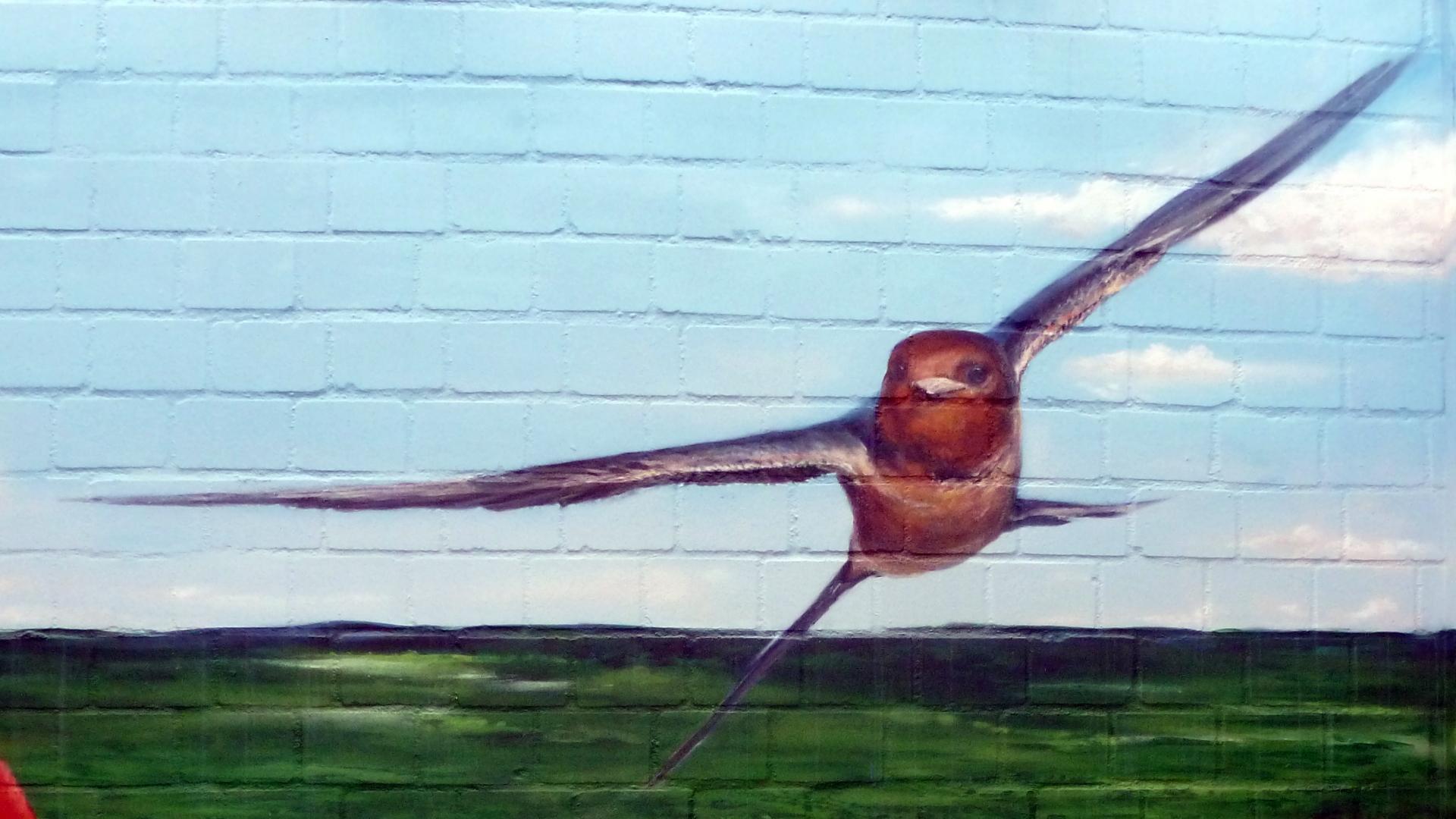 maler-in-wedel-und-hamburg-aussenarbeiten-graffiti-mohnblumenfeld-schwalbe-slideshow
